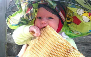 Мед в сотах (25 фото): польза и вред, как можно есть и хранить в домашних условиях