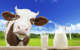 Белок в молоке: что такое молочный белок, содержание в 100 граммах и в литре коровьего домашнего молока