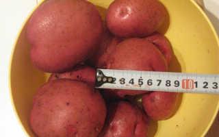 Описание сорта картофеля «Кураж» (14 фото): характеристика и отзывы