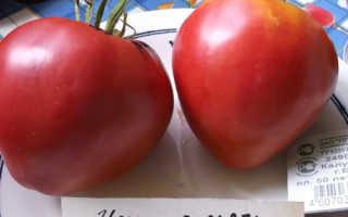 Томат «Чудо земли» (19 фото): описание, характеристика и урожайность сорта помидоров, высота кустов, отзывы