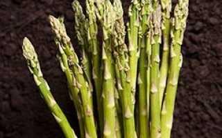 Калорийность спаржи: сколько калорий в маринованном овоще на 100 грамм, БЖУ и ккал белой и зеленой спаржи