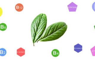 Листья брусники (35 фото): полезные лечебные свойства и противопоказания, инструкция по применению, отзывы о брусничных отварах