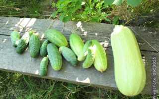 Что можно сажать рядом с огурцами? 18 фото Можно ли посадить кабачки и морковь на