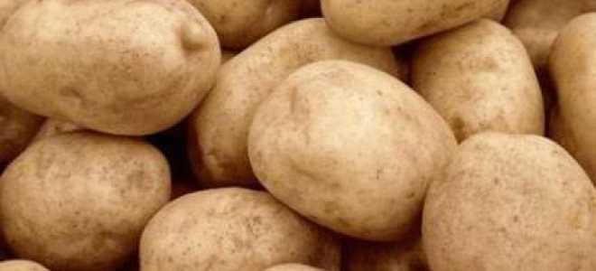 Описание сорта картофеля «Тулеевский» (19 фото): характеристика и вкусовые качества, отзывы