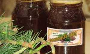 Сосновый мед: польза и вред продукта из почек и шишек, как сварить по рецепту из молодых побегов сосны