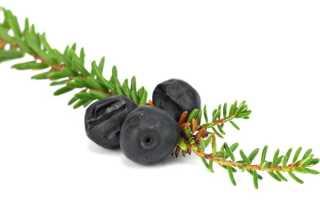Шикша (13 фото): съедобная или нет черная ягода водяника? Как хранить воронику? Отзывы