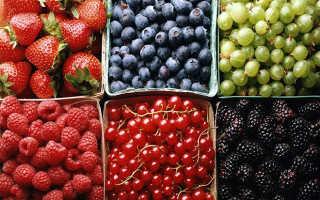 Самая большая ягода: какая ягода больше всех в мире?