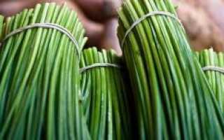 Шнитт-лук (50 фото): выращивание и уход за луком-скородой, резанецом и сибулетом, что это такое и полезные свойства
