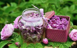 Цветок Роза: лечебные, полезные свойства и противопоказания, настойка и сироп