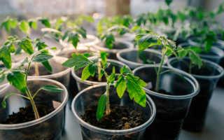 Чем подкормить рассаду помидоров? Как правильно удобрить, чтобы были толстыми, подкормка томатов в домашних условиях для хорошего роста