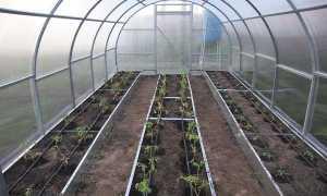 Посадка помидоров в теплицу (86 фото): как правильно сажать томаты в конструкцию из поликарбоната, правила ухода и выращивания