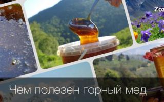 Горный мед: классический из Киргизии, полезные свойства и противопоказания алтайского варианта, характеристика высокогорного продукта