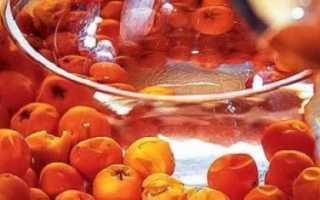 Вино из рябины: рецепт приготовления наливки из красной сушеной рябины в домашних условиях, когда надо собирать