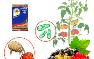 Инструкция по применению «Тиовит Джет» для винограда: когда и как правильно обрабатывать растение препаратом