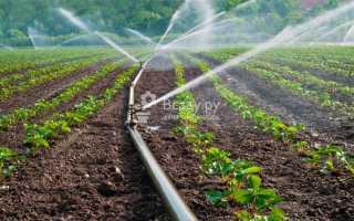 Можно ли поливать клубнику холодной водой во время цветения? Почему лучше осуществлять полив теплой водой