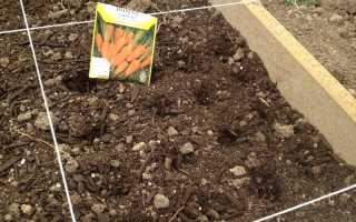 Когда сажать морковь? Как сеять в мае в открытый грунт, благоприятные дни посадки