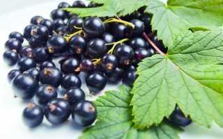 Морс из замороженной черной смородины: рецепты, польза и калорийность, как приготовить