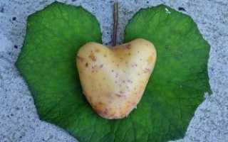 Можно ли есть картофель при похудении? Употребление вареного овоща при диете, в каком виде нельзя