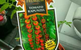 Помидоры «Рапунцель» (13 фото): описание сорта томата, урожайность в домашних условиях, отзывы