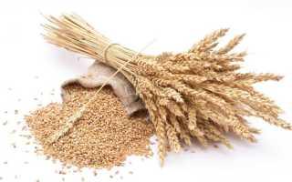Пшеничная каша для детей: с какого возраста можно давать блюдо грудничку и может ли быть