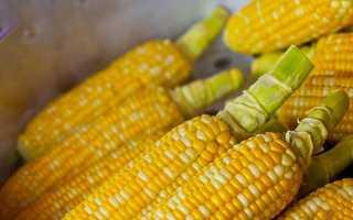 Кукуруза при грудном вскармливании (16 фото): можно ли есть кормящей маме вареную кукурузу в первый месяц новорожденного