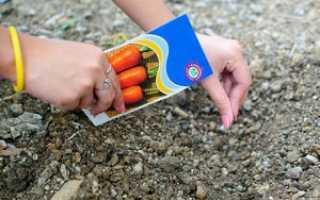Посадка моркови: как сажать семенами в открытый грунт весной, хитрости посева и как сделать, чтобы быстро взошла