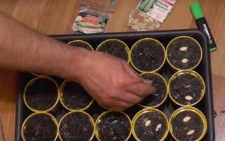 Посадка кабачков рассадой в открытый грунт (18 фото): как правильно сажать, сроки и пошаговая схема выращивания