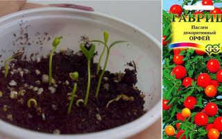 Паслен комнатный (24 фото): уход за декоративным растением в домашних условиях, как посадить кустарник?