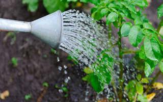 Нужно ли поливать картофель после посадки? Как часто надо орошать, когда можно произвести полив первый раз