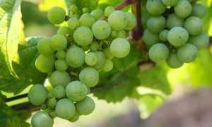 Зеленые овощи: список длинных и листовых овощных продуктов зеленого цвета, их польза и вред