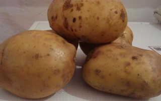 Описание сорта картофеля «Невский» (26 фото): характеристика и вкусовые качества, отзывы