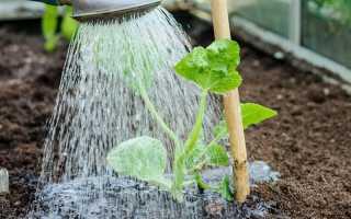 Как часто поливать огурцы в теплице? 23 фото Когда лучше орошать в конструкции из поликарбоната,