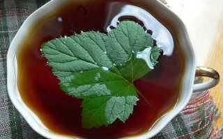 Ферментация листьев смородины: как ферментировать смородиновую зелень для чая в домашних условиях