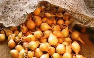 Посадка лука-севка в регионах Урала и Сибири: как можно сажать овощ весной на репку, сроки и сорта