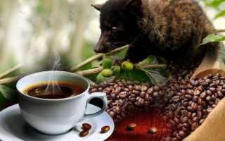 Кофе копи лювак (19 фото): самый дорогой напиток в мире из кала животных из Индонезии