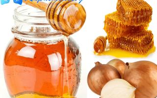 Лук с медом (20 фото): рецепт от кашля для детей, полезные свойства и противопоказания, сок