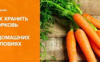 Как хранить морковь? Как держать в холодильнике в домашних условиях, хранение зимой в погребе