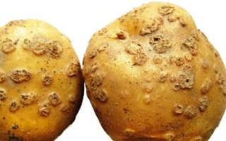Болезни картофеля и борьба с ними, фото и описание