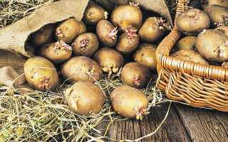 Посадка картофеля в Сибири и на Урале: сроки 2020, когда можно садить и как правильно выращивать