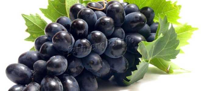 Виноград «Фуршетный» (29 фото): описание сорта и отзывы