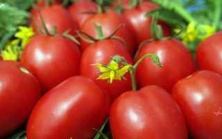 Томат «Диаболик F1» (13 фото): характеристика и описание сорта помидоров, урожайность куста, отзывы