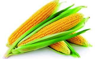 Вареная кукуруза (48 фото): польза и вред для здоровья, рецепты и как хранить, свойства и гликемический индекс