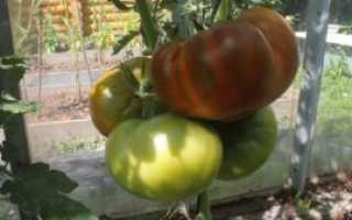 Томат «Малахитовая шкатулка» (19 фото): описание и характеристика сорта помидор, высота кустов, отзывы