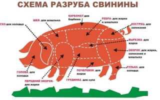 Части свинины (16 фото): названия мяса при разделке свиной туши, как приготовить тазобедренную часть? Какой
