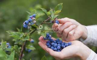 Как быстро собирать землянику? Сбор лесной и полевой ягоды руками и с помощью приспособлений