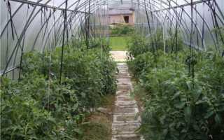Как подвязывать помидоры в теплице? 53 фото Как правильно подвязать шпагатом в конструкции из поликарбоната, способы без кольев