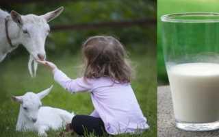 Нужно ли кипятить козье молоко перед употреблением? Можно ли пить некипяченое молоко и как правильно