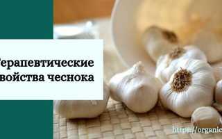 Чесночная трава (чесночница) – свойства, польза, вред и применение
