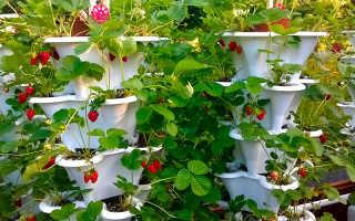 Вертикальные грядки для клубники (30 фото): особенности выращивания и способы изготовление клумбы своими руками, посадка растения