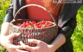 Как сохранить клубнику в холодильнике свежей? Как правильно и дольше можно хранить ягоды, срок хранения